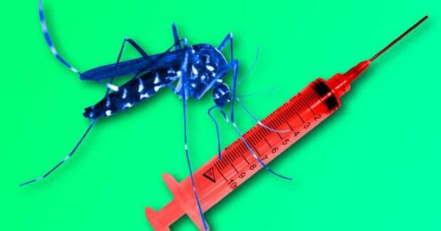 4 факта о том, как волонтеров заражают малярией, чтобы найти лекарство