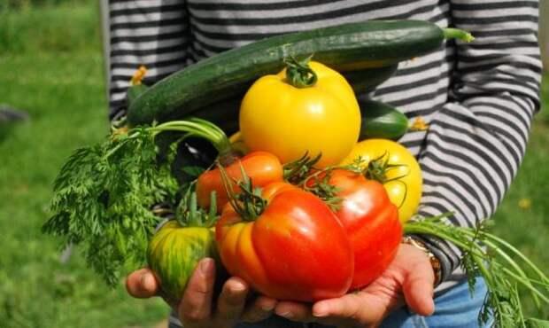 Российские ученые разработали удобрение, способное повысить урожайность на 25 %