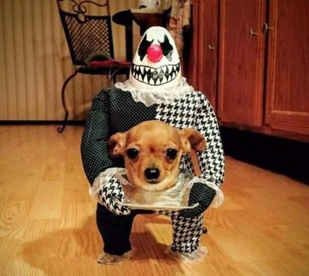 ТОП-20 забавных фото животных этой недели