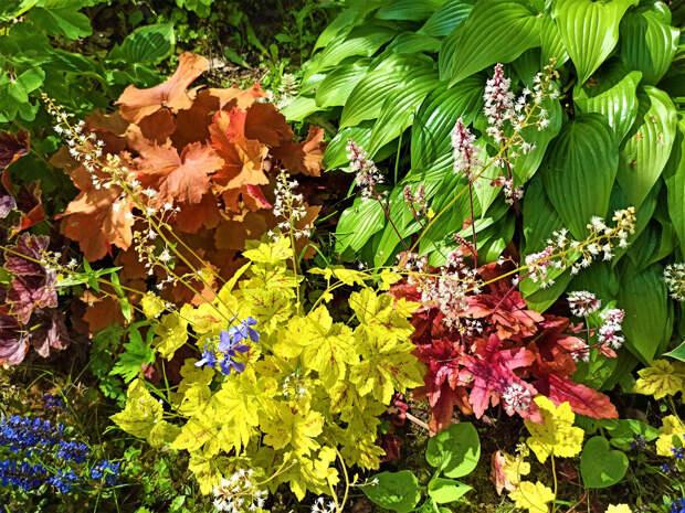 Бесплатный способ украсить сад растениями – выгодно и просто: делюсь проверенным методом