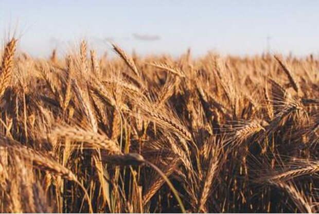 Ученые нашли способ прокормить растущее население Земли