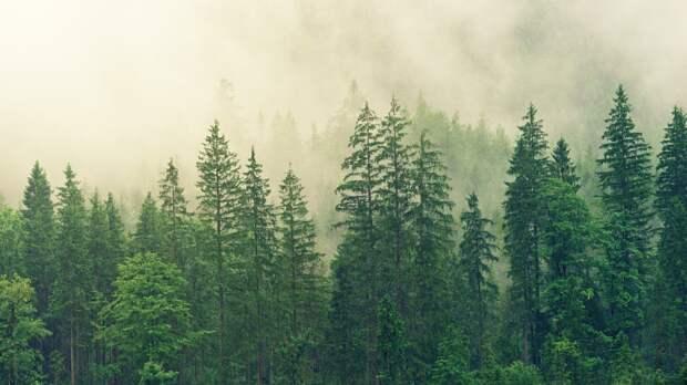 Волгоградские леса полностью обработали от вредителей