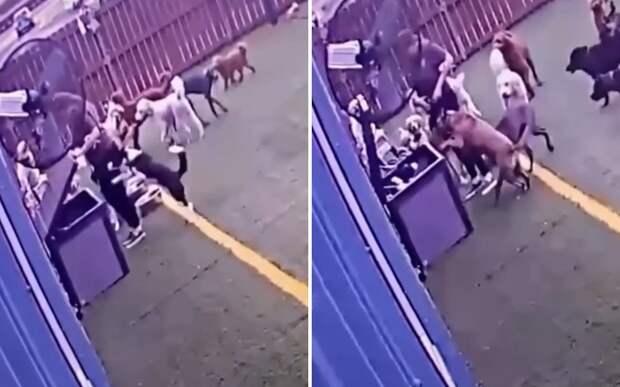 Вход в Нарнию: псы прыгнули в мусорный контейнер и заставили Сеть хохотать
