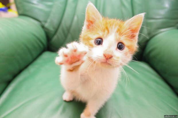 Прикольные картинки  гифки, демотиваторы, коты