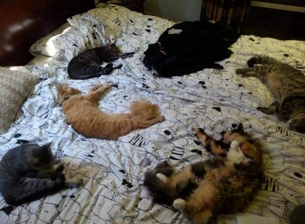 Вот 15 причин никогда не заводить котиков!