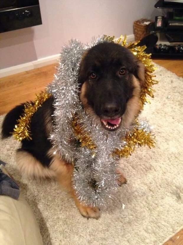 Я - новогодняя елка! Эти забавные животные, животные, забавно, зверские шутки, смешно, собаки, ты не поверишь, фото