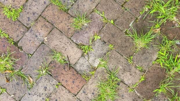 Как избавиться от сорняков и мха на садовой дорожке: эффективные способы
