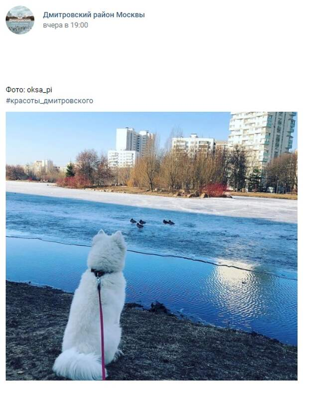 Фото дня: пес и утки на Ангарских прудах