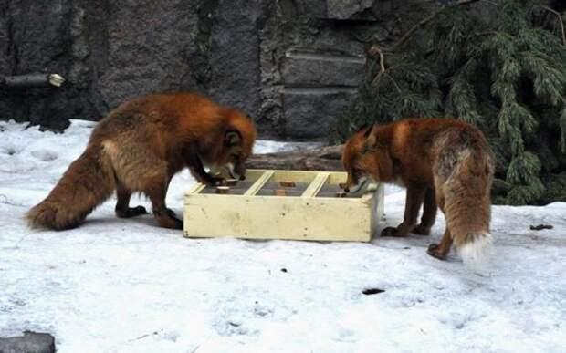 Московский зоопарк в будущем году начнет спасать летучих мышей