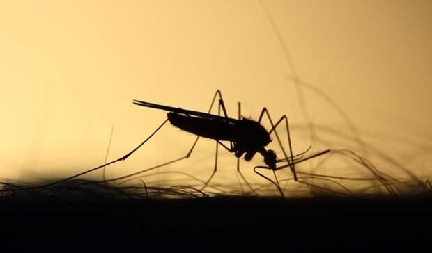 Вмэрии Оренбурга рассказали опланах поистреблению комаров