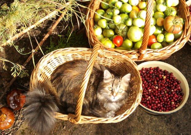 Кошка Пакля. Фото Маргариты
