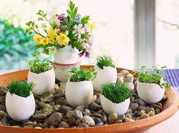Идеи к пасхе: трава в яйцах