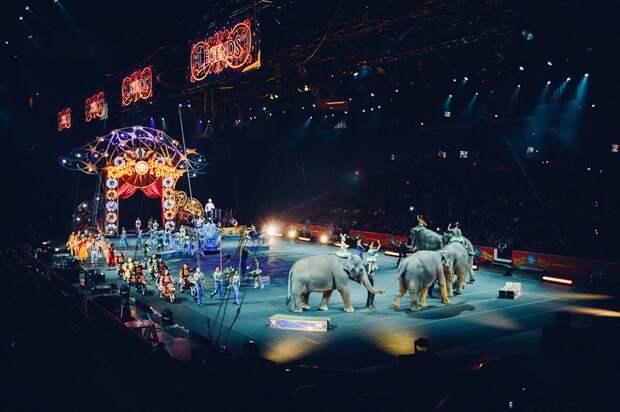 Слоны устроили драку прямо во время представления в Казанском цирке