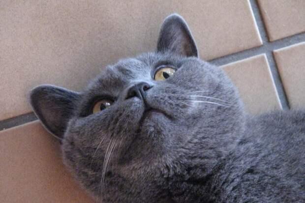 Заболевший кот не глотал таблетку и тогда его хозяевам пришла в голову «гениальная» идея!
