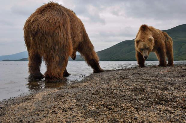 Животный мир Сергея Доли