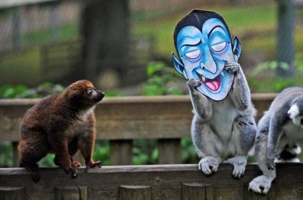 Веселые фотографии и смешные картинки для позитива (12 фото)
