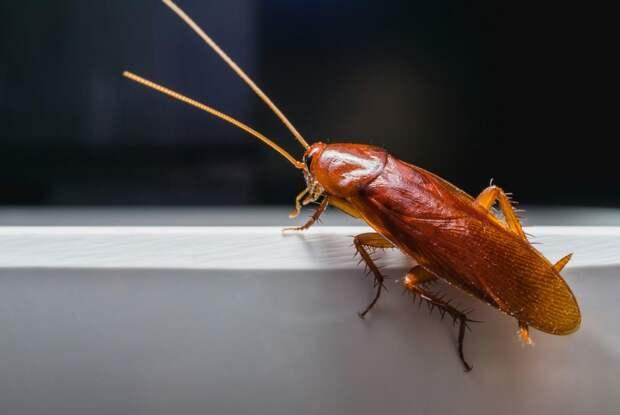 Специалисты рассказали, как избавиться от тараканов