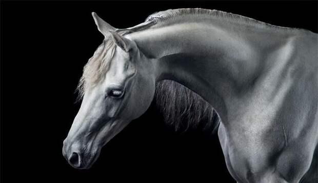 Потрясающие работы девушки, которая исполнила мечту детства и стала конным фотографом животные, искусство, лошади, фотография