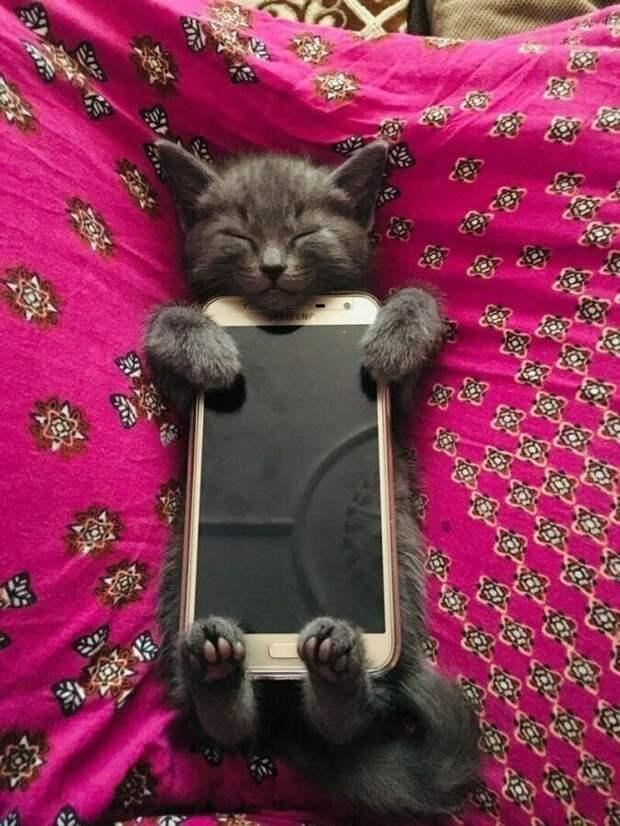 Кошачий фотопозитив
