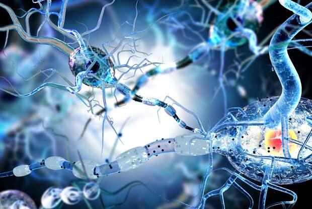 Что такое нейрогенетика
