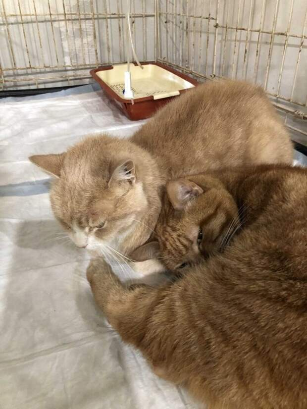 В морозы котенок жил на клеенке на автобусной остановке…Он голодал…