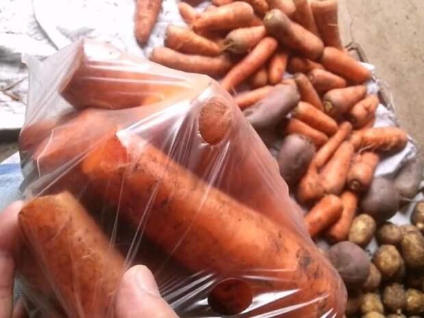 Проверенный способ хранения моркови