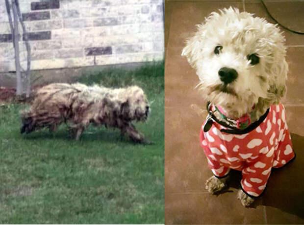 История спасения бродячей собаки, которая провела 2 года на улице!