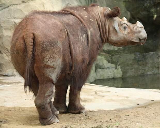 Международные специалисты назвали виды животных, которые вымрут в ближайшее время