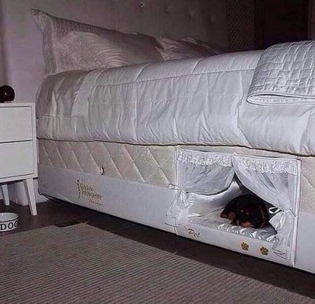 Конура ... В спальне :-)