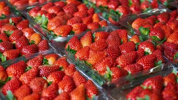 Сезон сбора ягод начался в Подмосковье