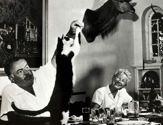 Кошка Бойсе на столе писателя.Сан-Франциско де Паула, Куба.