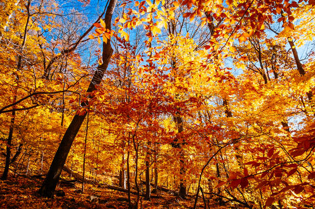 Осень. (Mat McDermott)