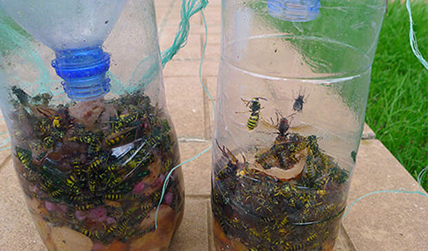 Делаем эффективные ловушки для любых насекомых: больше на даче не достают