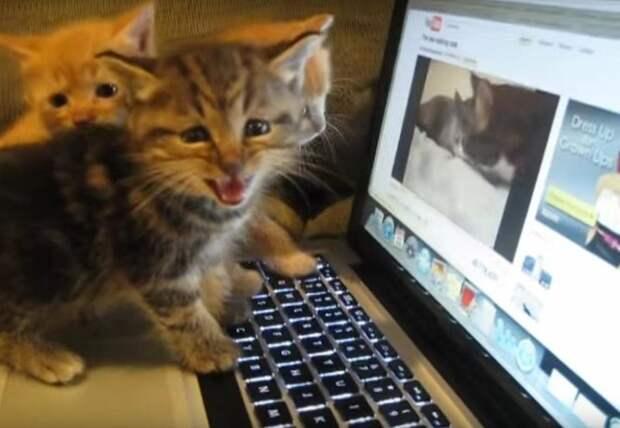 Умилительное зрелище! Котята смотрят «Занимательный диалог двух кошек»