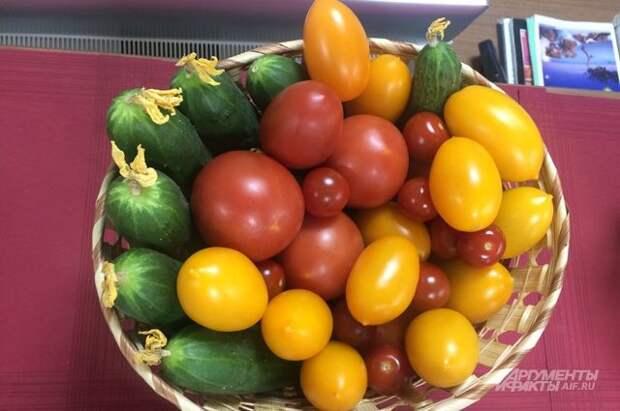 Спасаем томат. Как защитить растения от фитофтороза?