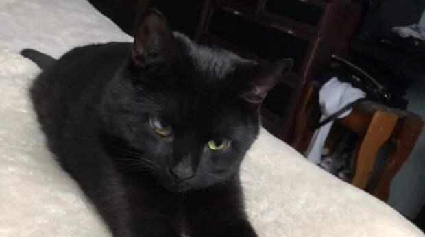 На теплотрассе грелся одинокий плешивый котенок, пока его не заметила добрая девушка