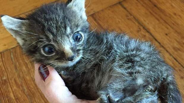 Кот-сирота не может прыгать на диваны и кресла, да и рост у него маловат, но зато любви хватит на целую Вселенную