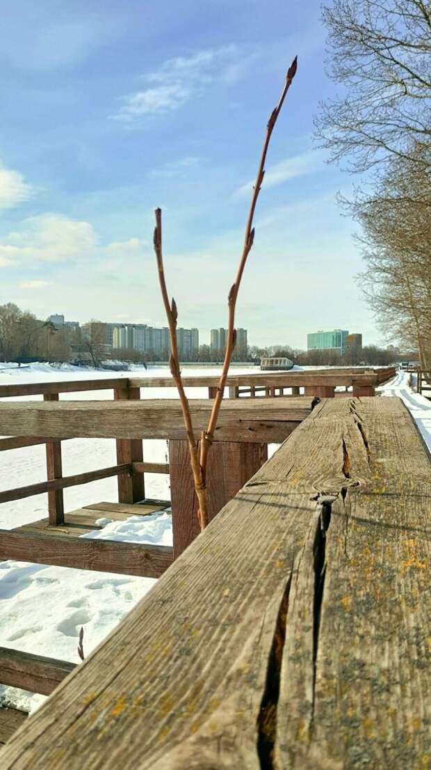 Фото дня: на дереве у Джамгаровского пруда набухли почки