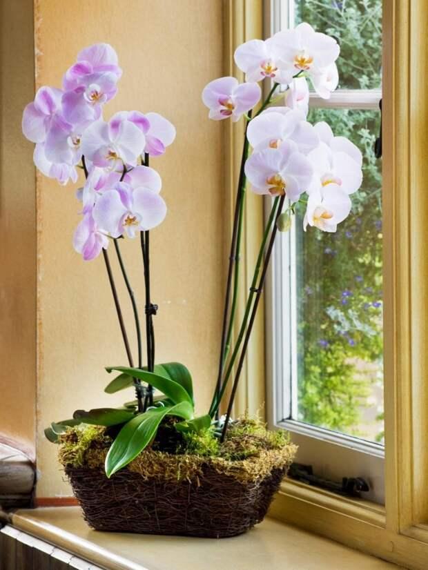 Копеечные препараты, которые спасут орхидею