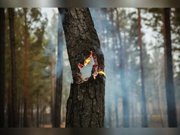Высокий класс пожарной опасности прогнозируется 15 июня в 20 районах Забайкалья