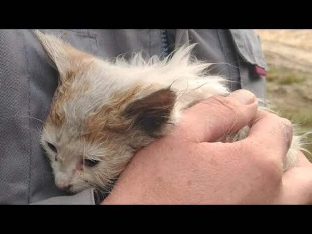 Котёнка оставили в лесу. Люди приехали в лес за грибами и услышали жалобный плач…