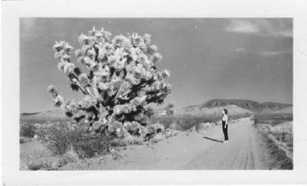 Женщина разглядывает растение с многочисленными разветвлениями, напоминающие веер.