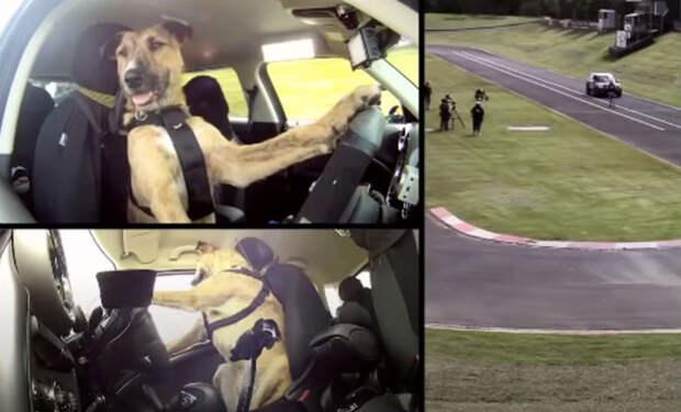 Странное поведение животных сняли на камеру: законы природы дают сбои