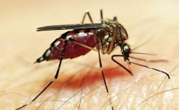 Лето-2021 без комаров ожидает жителей Новосибирска