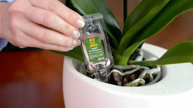 Спасение растений за счёт сообщающихся сосудов. / Фото: tut.by