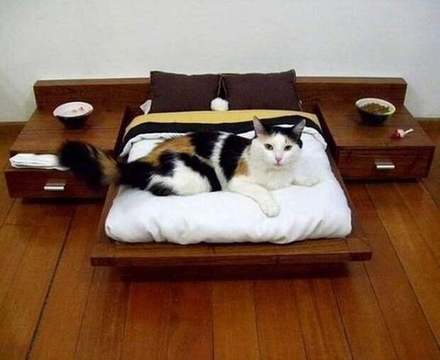cathouse16 Дизайн для котов