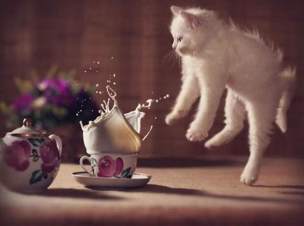 Фотографии котов, сделанных в самый нужный момент (19 фото)