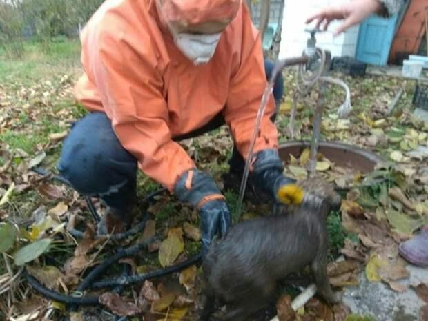 Спасатели вытащили из колодца маленького щенка в Белогорске