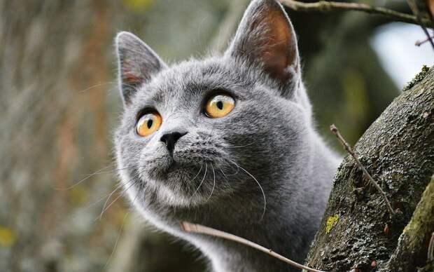перед кошачьим взглядом иногда сложно устоять