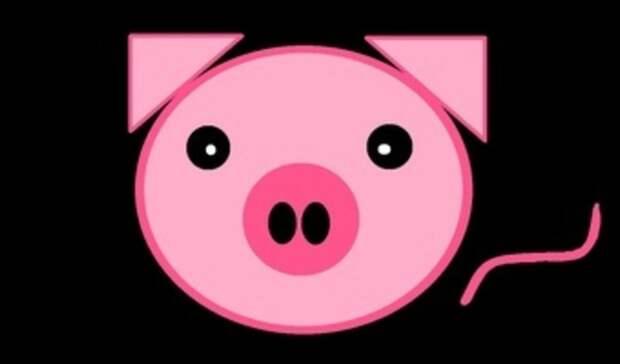 «Вика ищет свинью»: приморские дачники поделились своей бедой